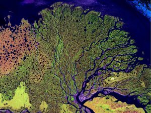 NASA false color satellite image of the delta of the Lena River as it reaches the Arctic Ocean in eastern Siberia.