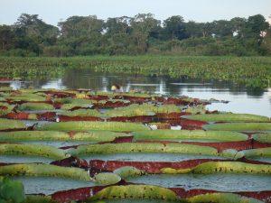 Photograph of the Pantanal wetlands.
