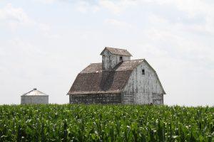 Photograph of barn and corn field in Iowa.
