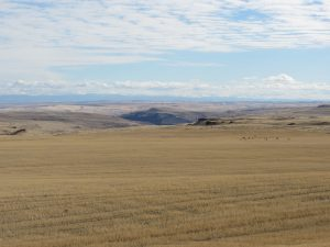 Eastern Washington, the dry side of the Cascade Mountains.